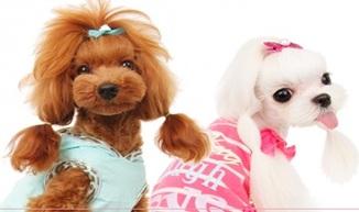 Accesorio para perros